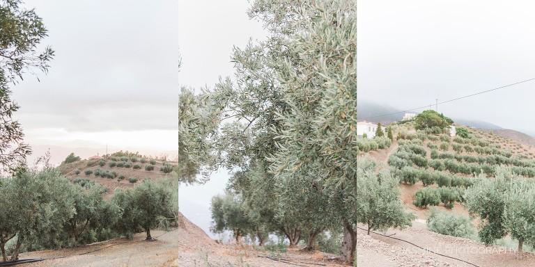 """olive grove"""